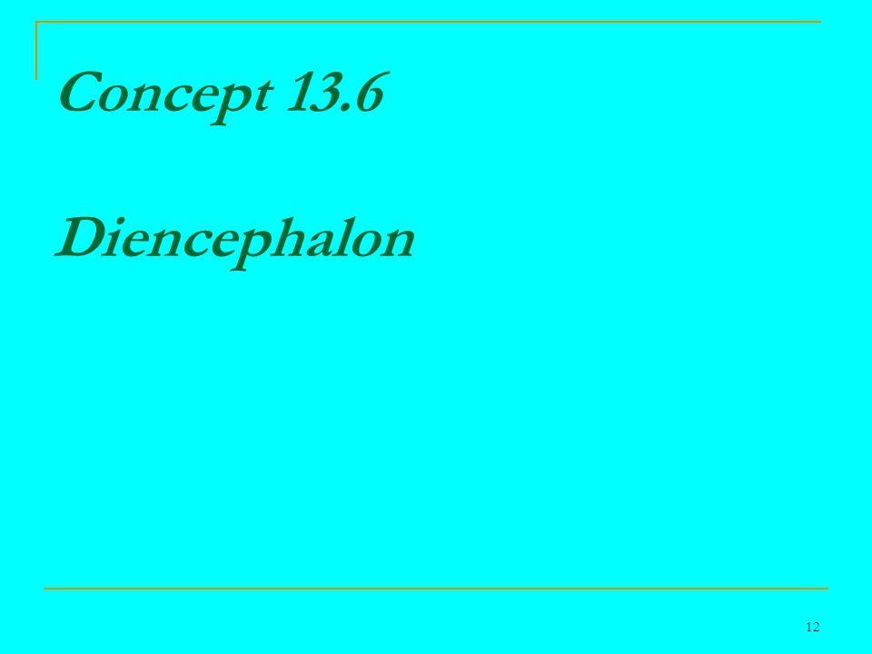 12 Concept 13.6 Diencephalon