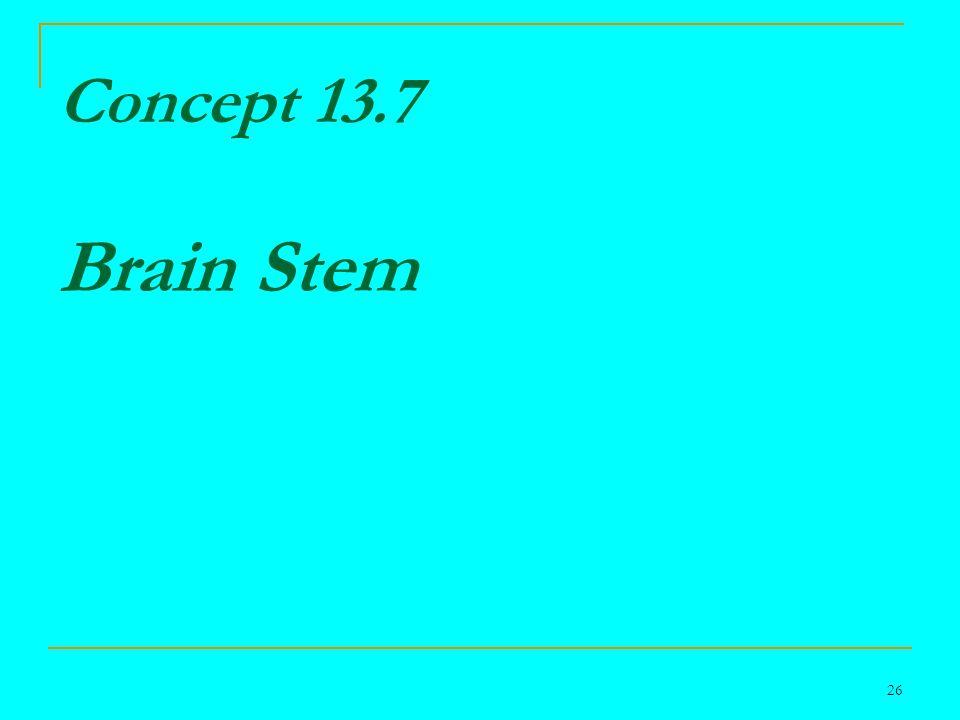 26 Concept 13.7 Brain Stem