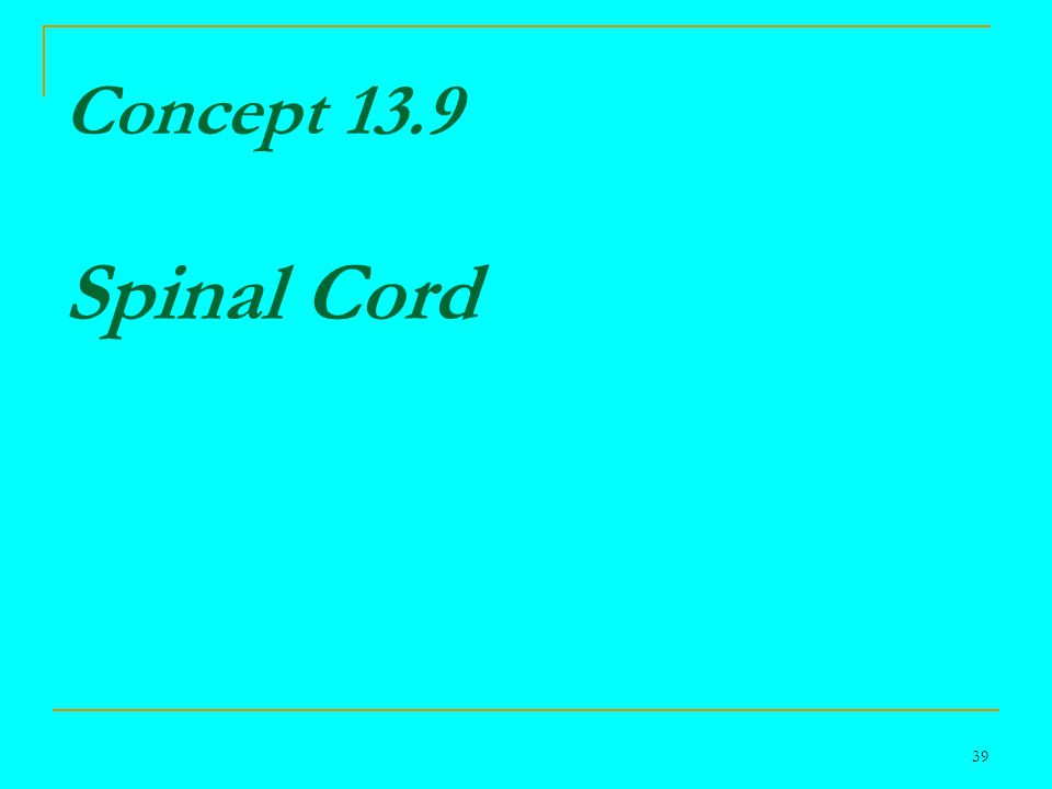 39 Concept 13.9 Spinal Cord