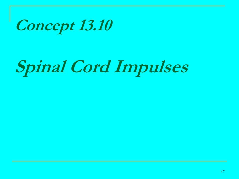 47 Concept 13.10 Spinal Cord Impulses