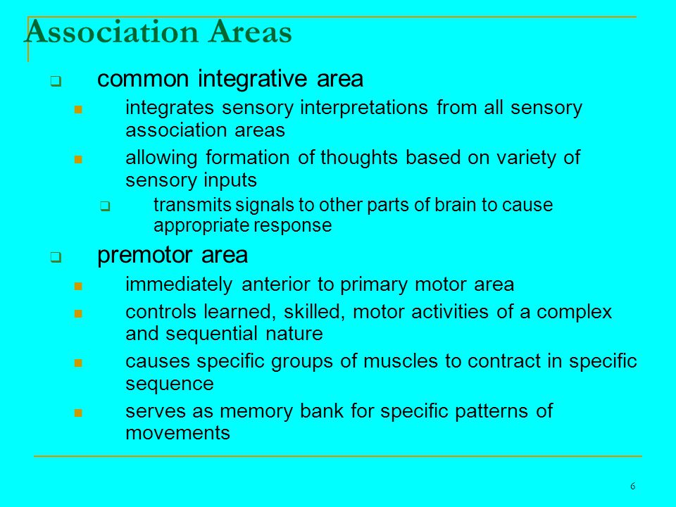 7 Association Areas  frontal eye field area controls voluntary scanning movements of eye reading for example
