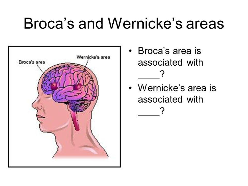 Broca's and Wernicke's areas Broca's area is associated with ____.
