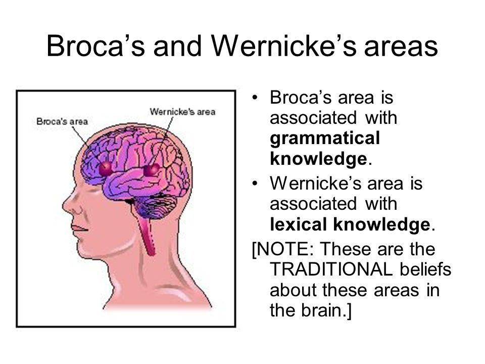 Broca's and Wernicke's areas Broca's area is associated with grammatical knowledge.