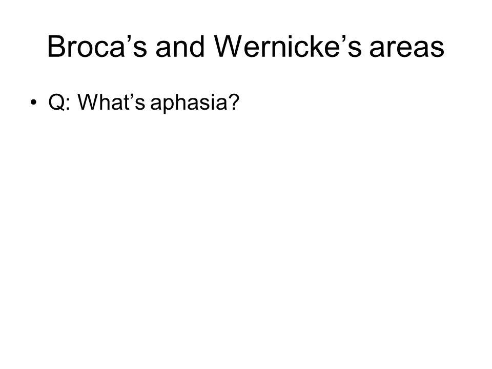 Broca's and Wernicke's areas Q: What's aphasia?