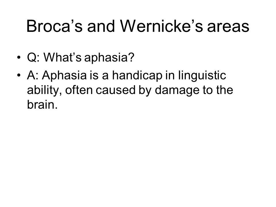Broca's and Wernicke's areas Q: What's aphasia.