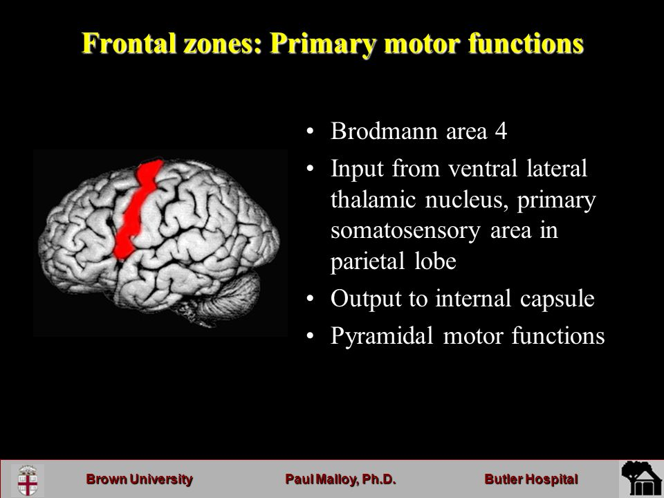 Brown UniversityPaul Malloy, Ph.D.Butler Hospital Frontal zones: Primary motor functions Brodmann area 4 Input from ventral lateral thalamic nucleus, primary somatosensory area in parietal lobe Output to internal capsule Pyramidal motor functions