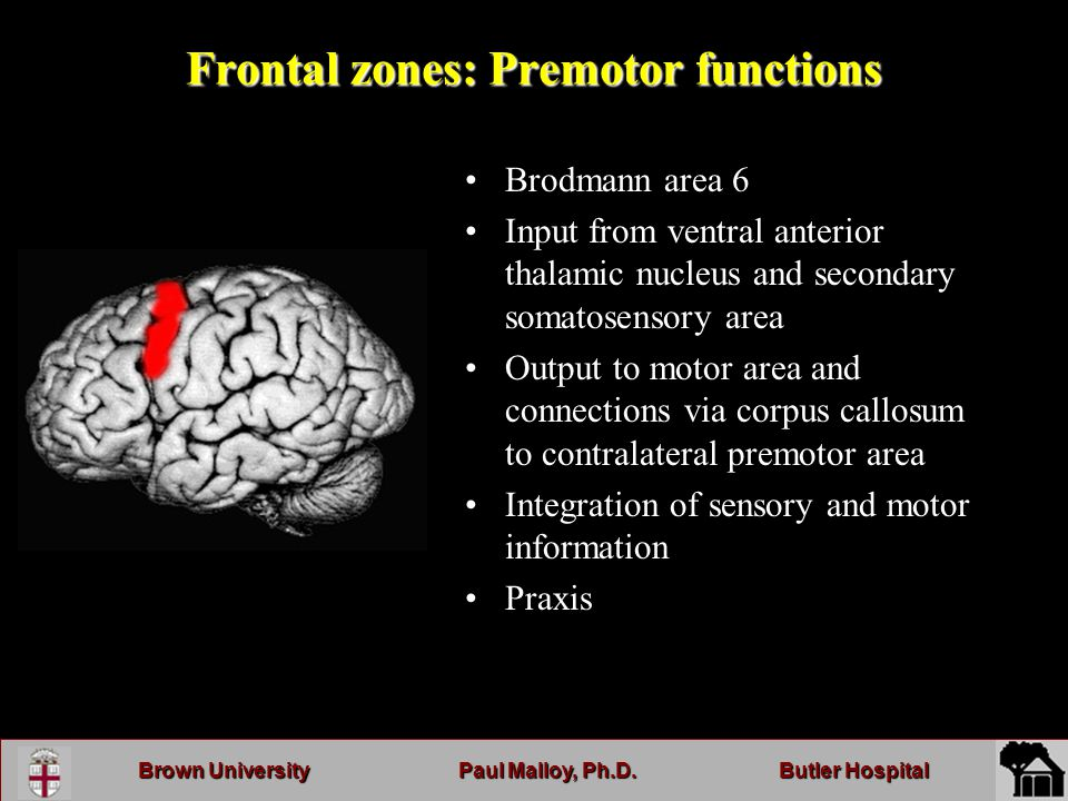 Brown UniversityPaul Malloy, Ph.D.Butler Hospital Frontal zones: Premotor functions Brodmann area 6 Input from ventral anterior thalamic nucleus and secondary somatosensory area Output to motor area and connections via corpus callosum to contralateral premotor area Integration of sensory and motor information Praxis