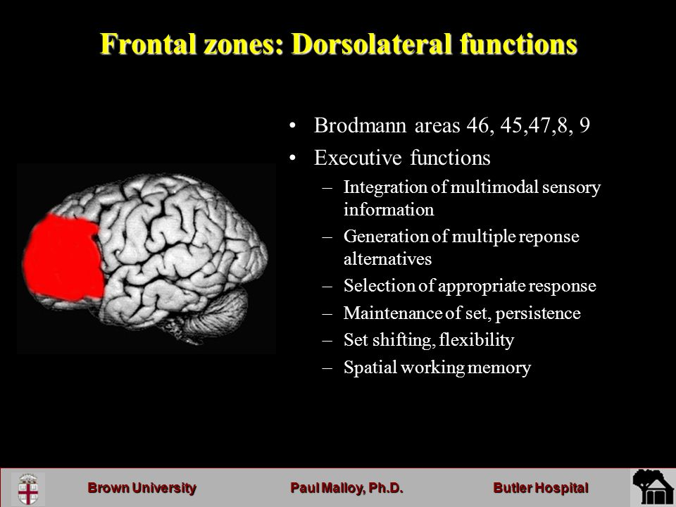 Brown UniversityPaul Malloy, Ph.D.Butler Hospital Frontal zones: Dorsolateral functions Brodmann areas 46, 45,47,8, 9 Executive functions –Integration of multimodal sensory information –Generation of multiple reponse alternatives –Selection of appropriate response –Maintenance of set, persistence –Set shifting, flexibility –Spatial working memory