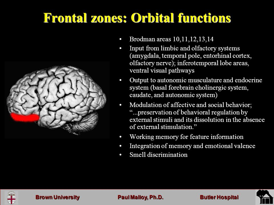 Brown UniversityPaul Malloy, Ph.D.Butler Hospital Frontal zones: Orbital functions Brodman areas 10,11,12,13,14 Input from limbic and olfactory systems (amygdala, temporal pole, entorhinal cortex, olfactory nerve); inferotemporal lobe areas, ventral visual pathways Output to autonomic musculature and endocrine system (basal forebrain cholinergic system, caudate, and autonomic system) Modulation of affective and social behavior; ...preservation of behavioral regulation by external stimuli and its dissolution in the absence of external stimulation. Working memory for feature information Integration of memory and emotional valence Smell discrimination