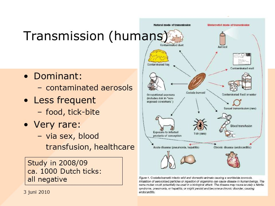 3 juni 20109 Dominant: –contaminated aerosols Less frequent –food, tick-bite Very rare: –via sex, blood transfusion, healthcare Transmission (humans) Study in 2008/09 ca.