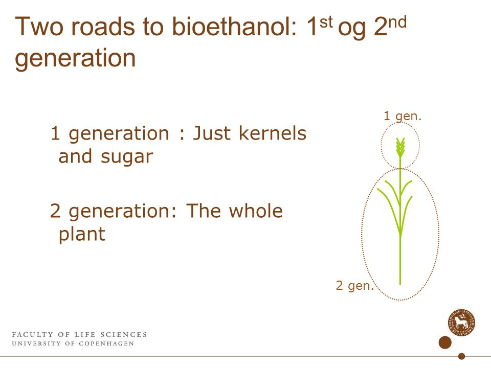 Two roads to bioethanol: 1 st og 2 nd generation 1 generation : Just kernels and sugar 2 generation: The whole plant 2 gen.