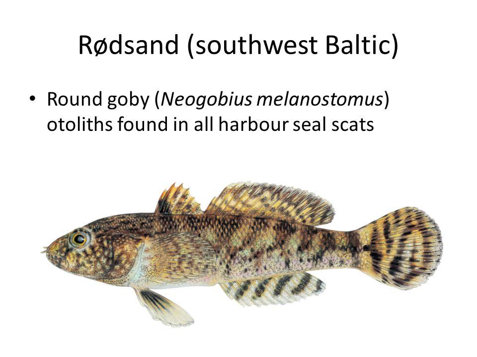 Rødsand (southwest Baltic) Round goby (Neogobius melanostomus) otoliths found in all harbour seal scats