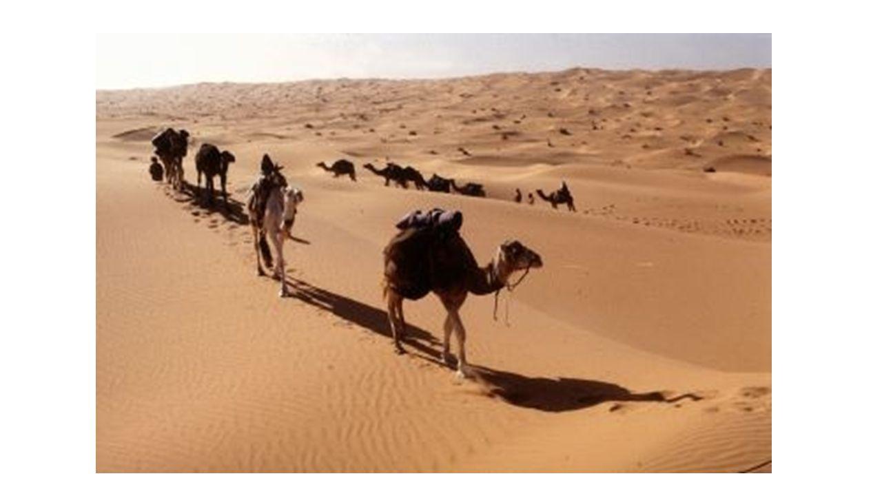 Cairo, Eygpt Elev: 116.1 m Lat: 29 ˚ 52 N Long: 31 ˚ 20 E Image of biomeClimatograph
