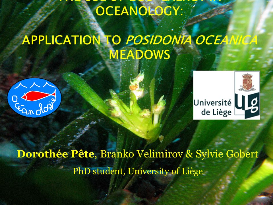 THE USE OF ECO-EXERGY IN OCEANOLOGY: APPLICATION TO POSIDONIA OCEANICA MEADOWS Dorothée Pête, Branko Velimirov & Sylvie Gobert PhD student, University