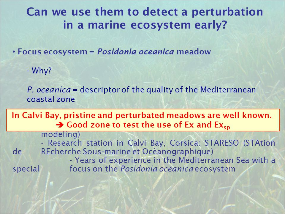 Focus ecosystem = Posidonia oceanica meadow - Why? P. oceanica = descriptor of the quality of the Mediterranean coastal zone University of Liege: - Tr