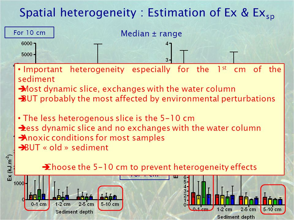 Spatial heterogeneity : Estimation of Ex & Ex sp Median ± range For 10 cm For 1 cm Important heterogeneity especially for the 1 st cm of the sediment