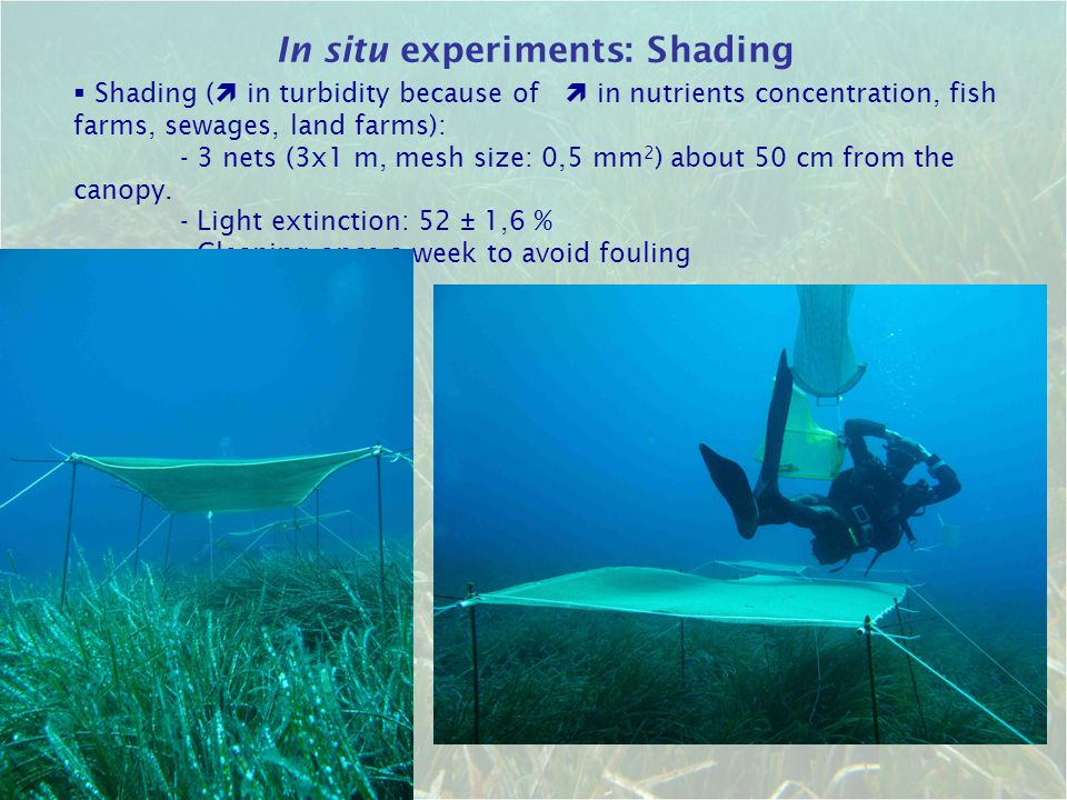 In situ experiments: Shading  Shading (  in turbidity because of  in nutrients concentration, fish farms, sewages, land farms): - 3 nets (3x1 m, m