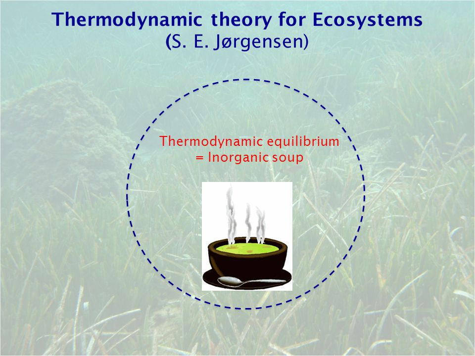 Thermodynamic theory for Ecosystems (S. E. Jørgensen) Thermodynamic equilibrium = Inorganic soup