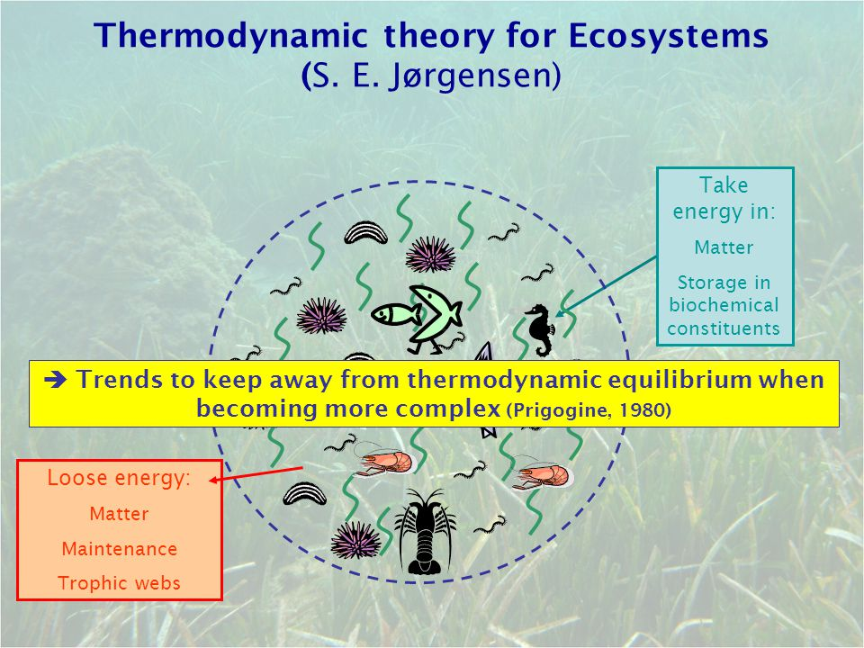 Take energy in: Matter Storage in biochemical constituents Thermodynamic theory for Ecosystems (S. E. Jørgensen)  Trends to keep away from thermodyna