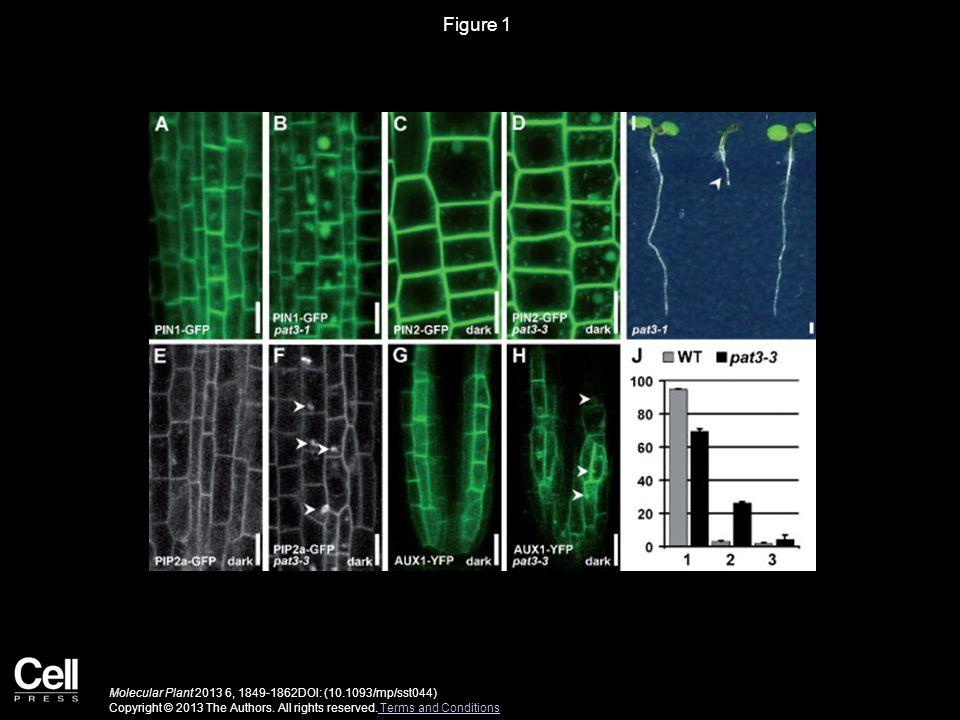 Figure 1 Molecular Plant 2013 6, 1849-1862DOI: (10.1093/mp/sst044) Copyright © 2013 The Authors.