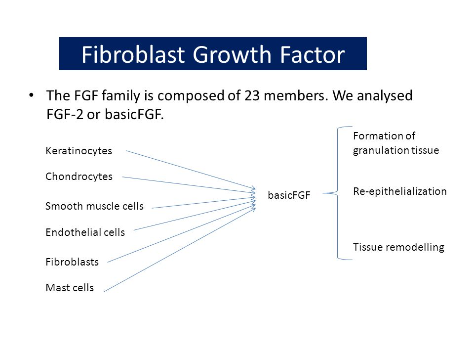 Fibroblast Growth Factor The FGF family is composed of 23 members. We analysed FGF-2 or basicFGF. Keratinocytes Mast cells Chondrocytes Smooth muscle