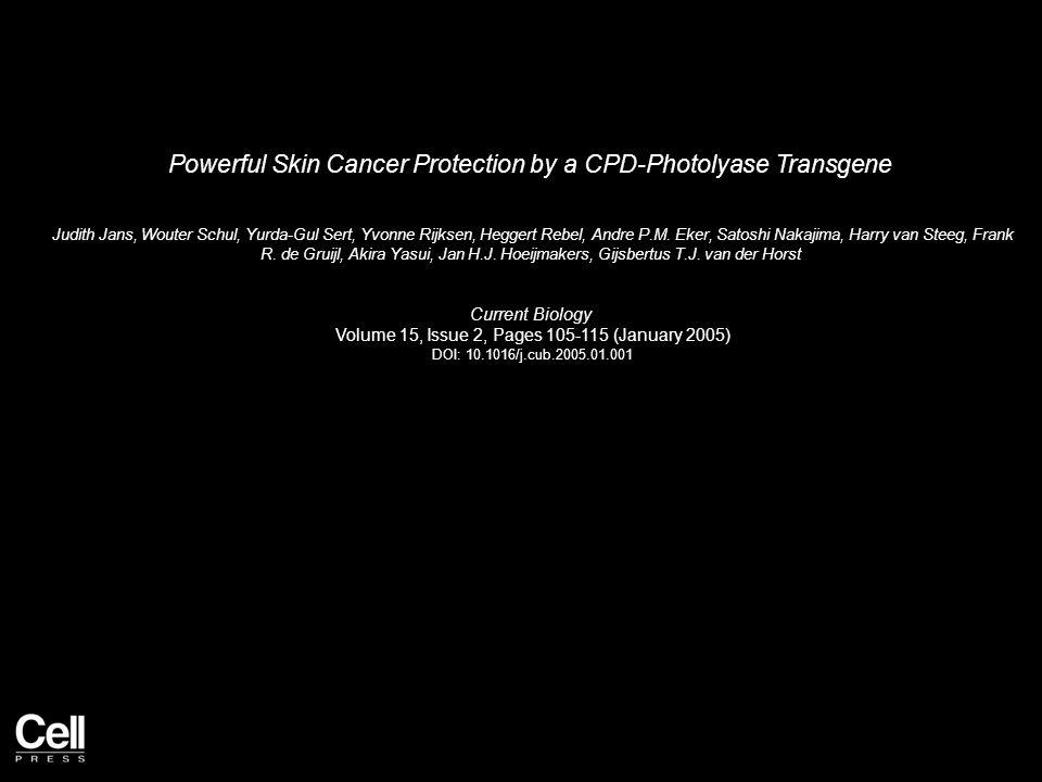 Powerful Skin Cancer Protection by a CPD-Photolyase Transgene Judith Jans, Wouter Schul, Yurda-Gul Sert, Yvonne Rijksen, Heggert Rebel, Andre P.M.