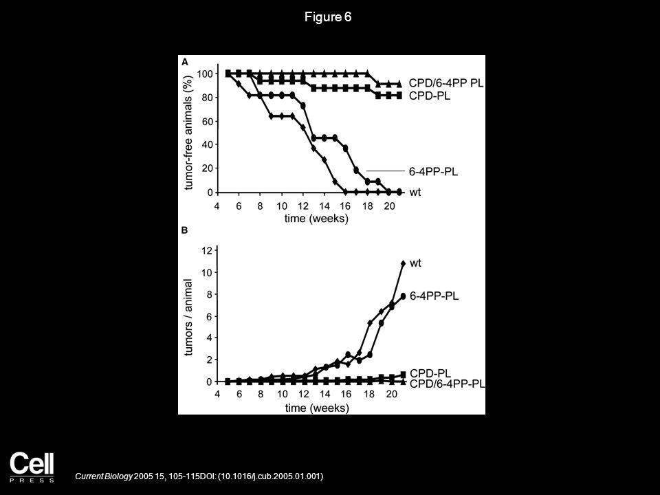 Figure 6 Current Biology 2005 15, 105-115DOI: (10.1016/j.cub.2005.01.001)