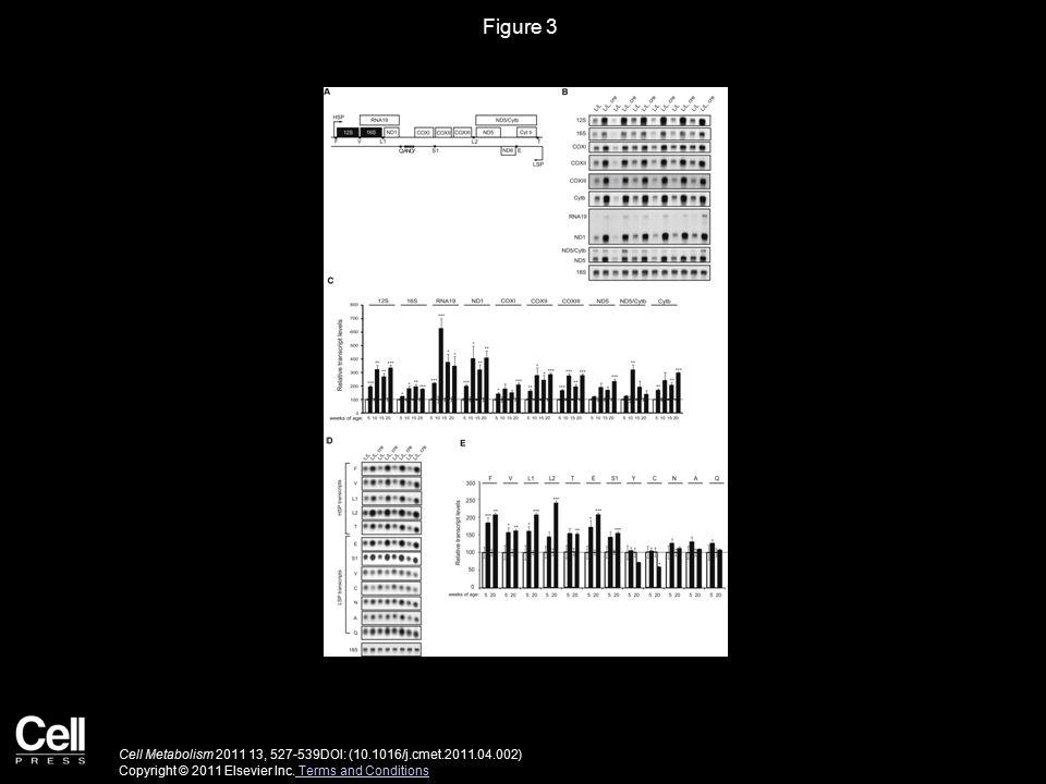 Figure 3 Cell Metabolism 2011 13, 527-539DOI: (10.1016/j.cmet.2011.04.002) Copyright © 2011 Elsevier Inc.