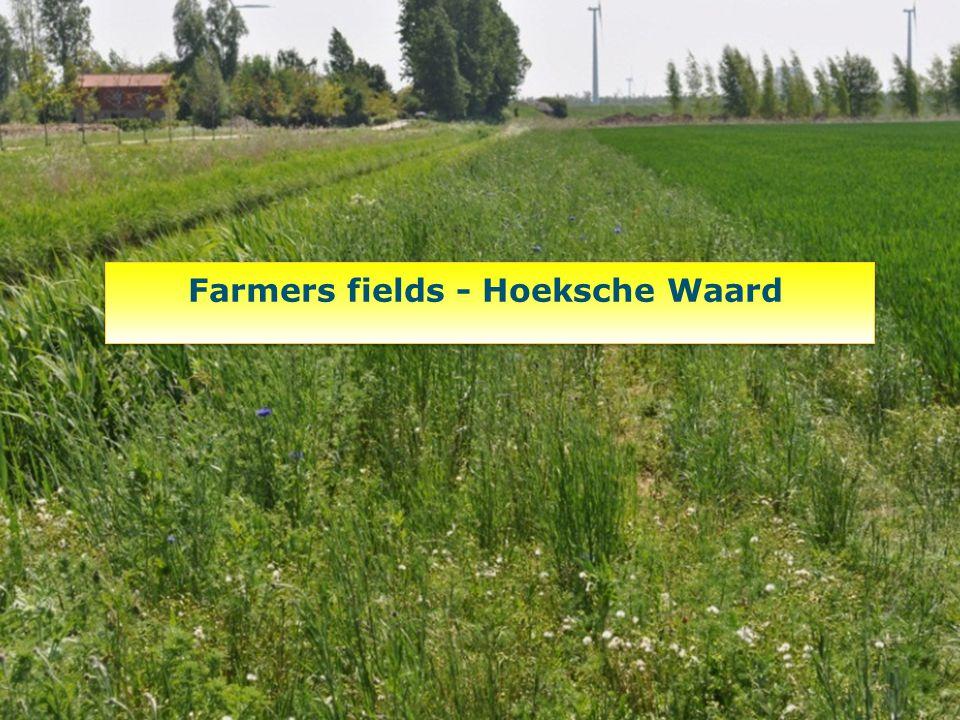 Farmers fields - Hoeksche Waard