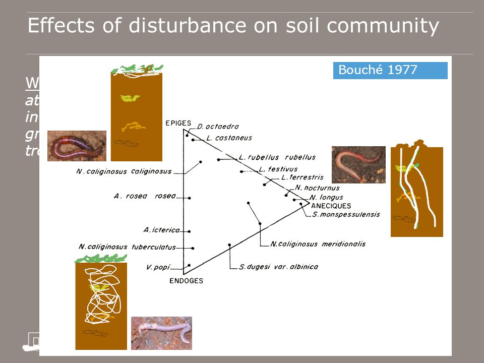 Effects of disturbance on soil community Wardle 1995: Responses to perturbation are best studied at a finer taxonomic resolution than normally used for investigating soil food webs; by emphasizing functional groups based on ecological relationships (e.g.