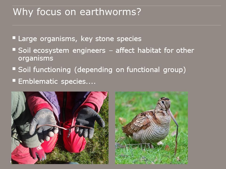 Why focus on earthworms.