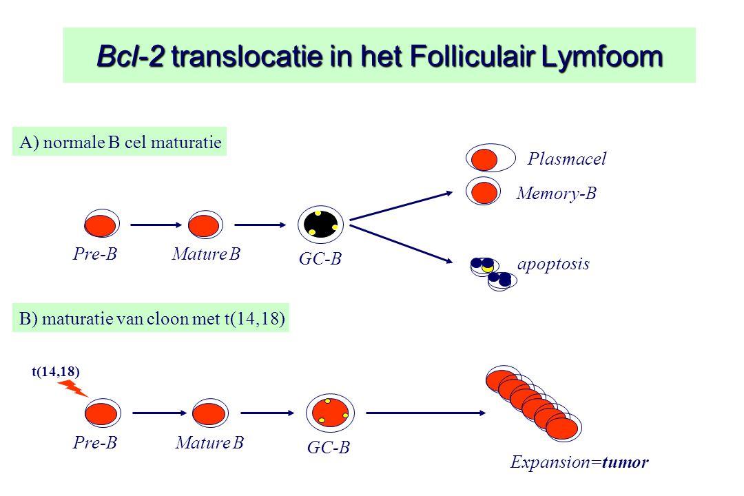 Bcl-2 translocatie in het Folliculair Lymfoom A) normale B cel maturatie Pre-BMature B GC-B Memory-B apoptosis B) maturatie van cloon met t(14,18) Pre-BMature B GC-B Expansion=tumor t(14,18) Plasmacel