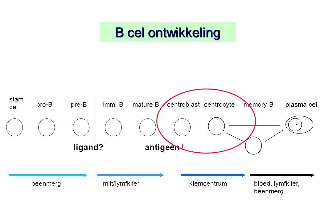 B cel ontwikkeling stam cel plasma cel ligand. pro-Bpre-Bimm.