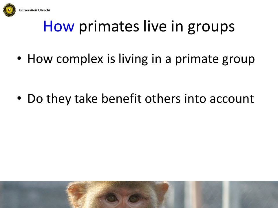 How primates live in groups How complex is living in a primate group Do they take benefit others into account