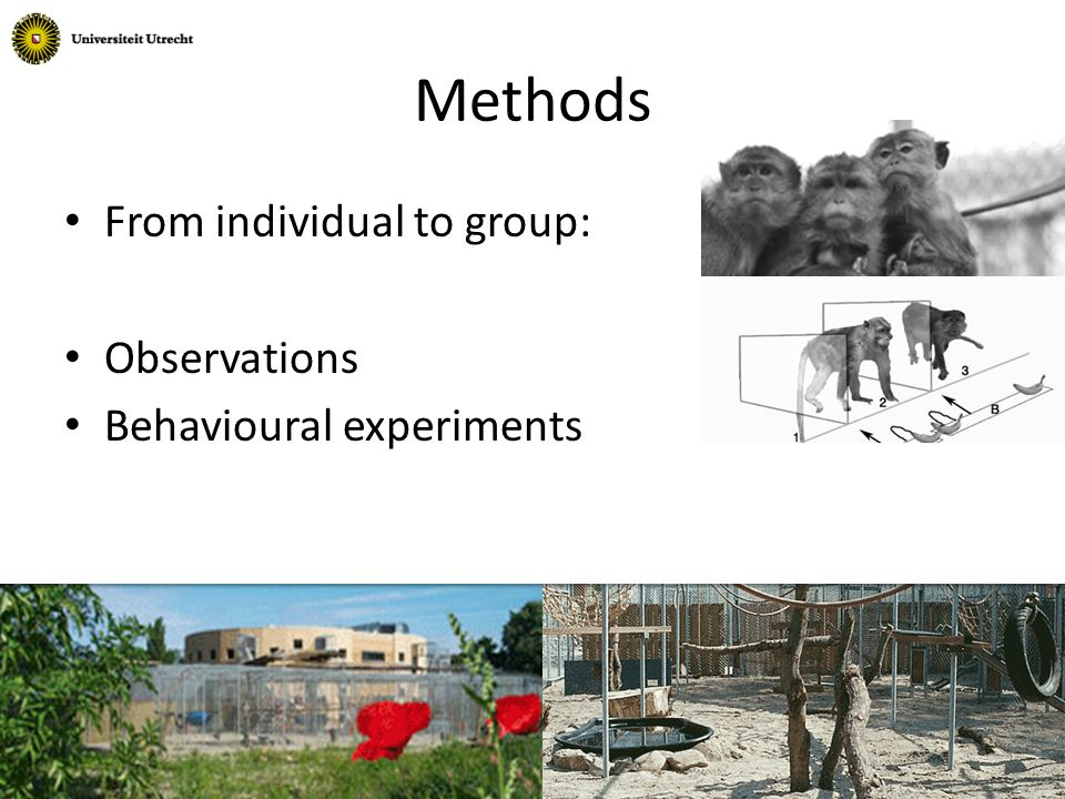 Methods From individual to group: Observations Behavioural experiments