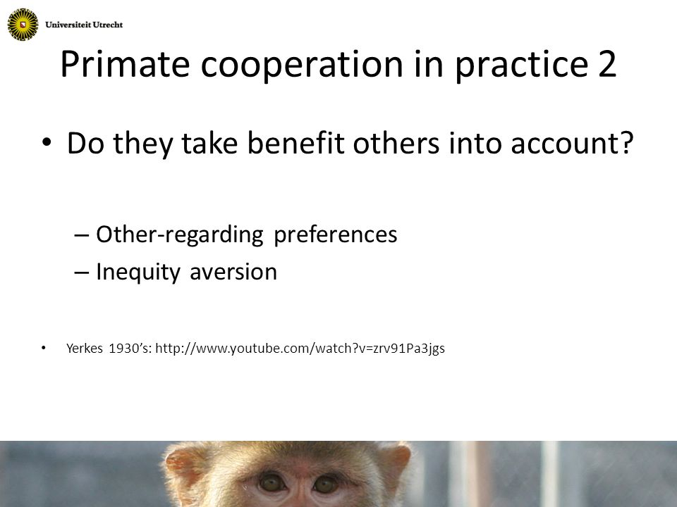 Primate cooperation in practice 2 Do they take benefit others into account.