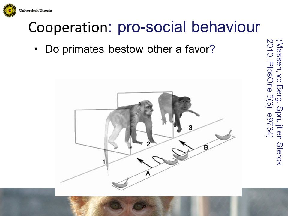 Cooperation : pro-social behaviour Do primates bestow other a favor.