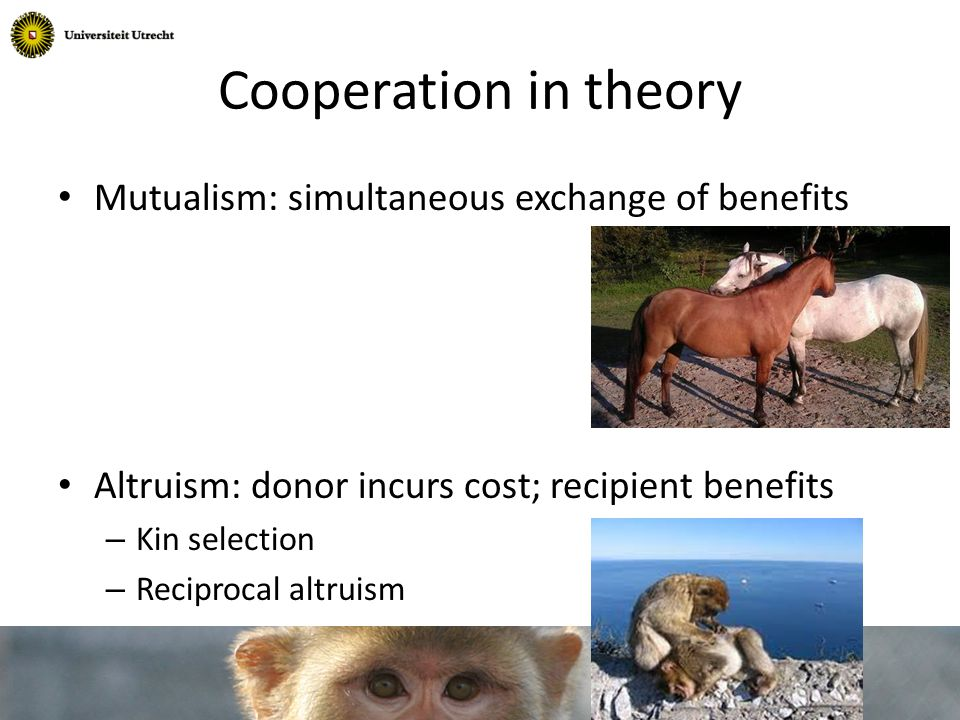 Kin selection (Hamilton 1964) Altruism when: C < r*B Costs < relatedness * Benefits
