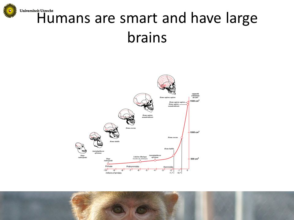 Humans are smart and have large brains