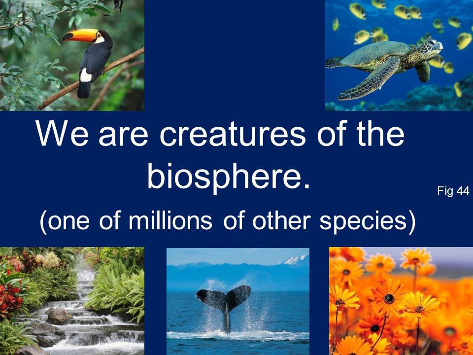 (one of millions of other species) We are creatures of the biosphere. Fig 44