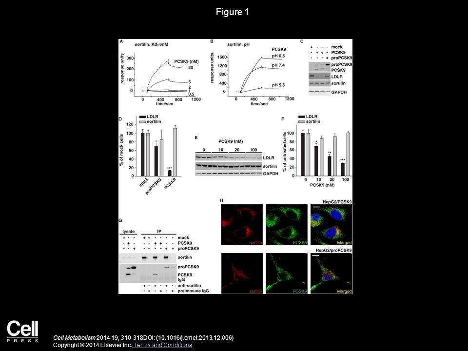 Figure 1 Cell Metabolism 2014 19, 310-318DOI: (10.1016/j.cmet.2013.12.006) Copyright © 2014 Elsevier Inc.