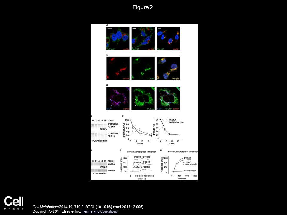 Figure 2 Cell Metabolism 2014 19, 310-318DOI: (10.1016/j.cmet.2013.12.006) Copyright © 2014 Elsevier Inc.