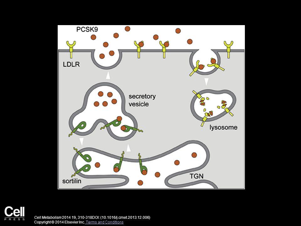 Cell Metabolism 2014 19, 310-318DOI: (10.1016/j.cmet.2013.12.006) Copyright © 2014 Elsevier Inc. Terms and Conditions Terms and Conditions
