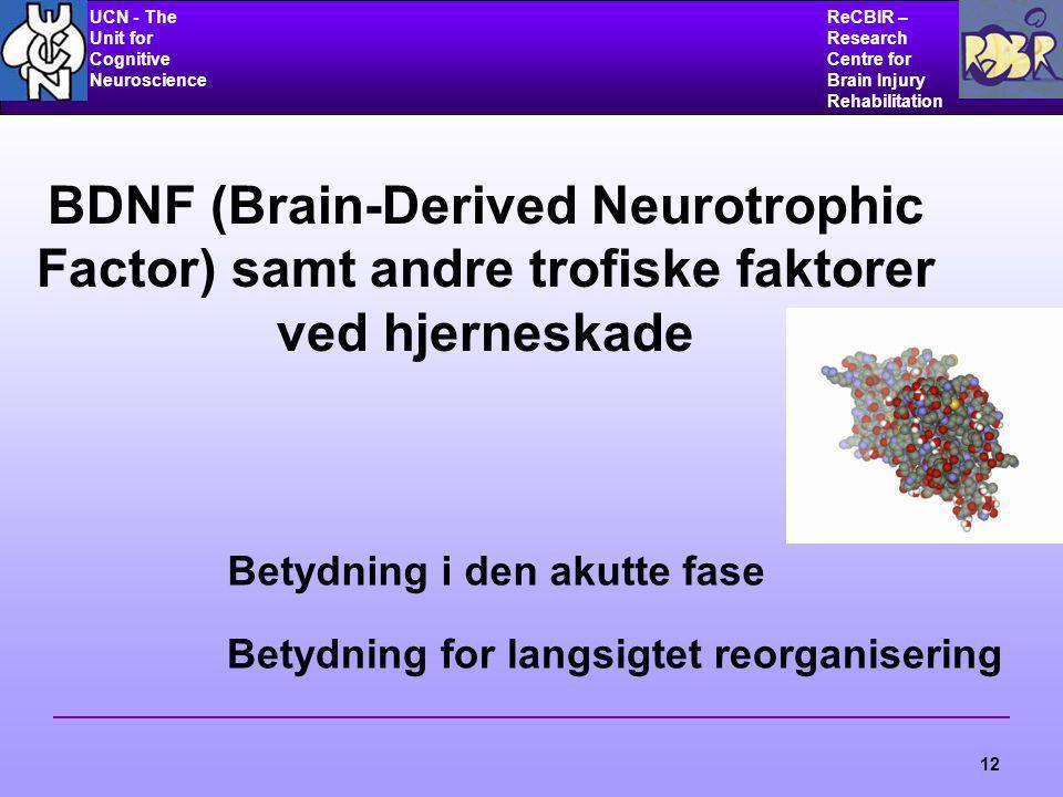 UCN - The Unit for Cognitive Neuroscience ReCBIR – Research Centre for Brain Injury Rehabilitation 12 BDNF (Brain-Derived Neurotrophic Factor) samt andre trofiske faktorer ved hjerneskade Betydning i den akutte fase Betydning for langsigtet reorganisering
