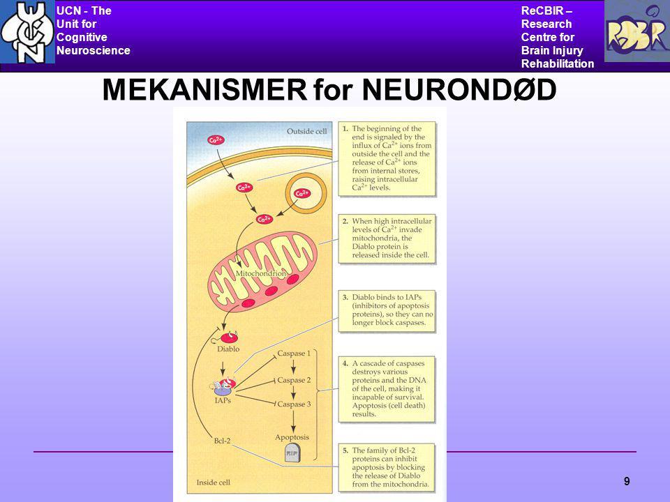 UCN - The Unit for Cognitive Neuroscience ReCBIR – Research Centre for Brain Injury Rehabilitation 9 MEKANISMER for NEURONDØD