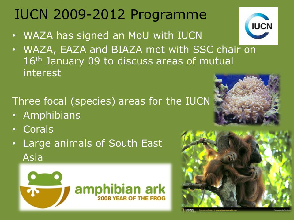 IUCN 2009-2012 Programme WAZA has signed an MoU with IUCN WAZA, EAZA and BIAZA met with SSC chair on 16 th January 09 to discuss areas of mutual interest Three focal (species) areas for the IUCN Amphibians Corals Large animals of South East Asia