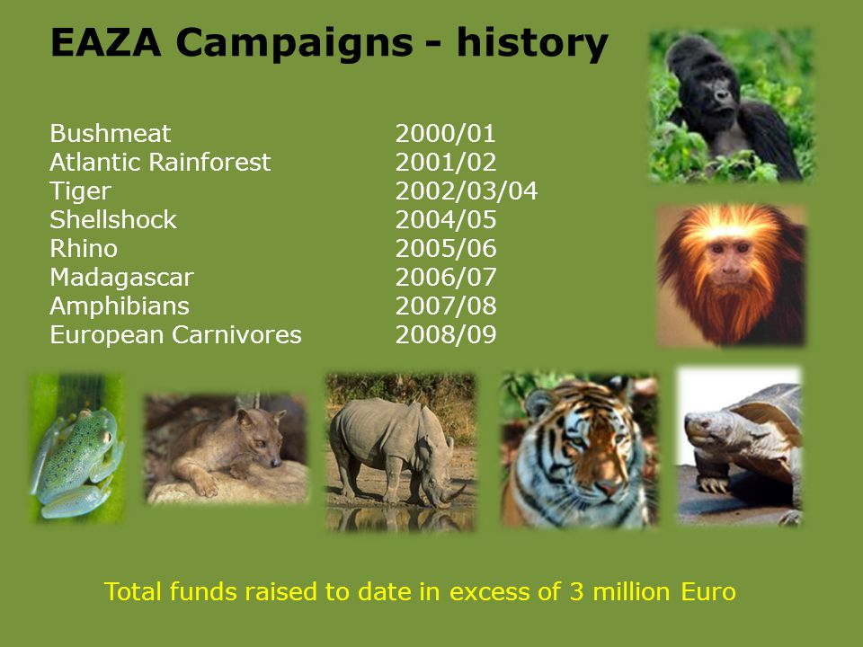 Bushmeat2000/01 Atlantic Rainforest2001/02 Tiger2002/03/04 Shellshock2004/05 Rhino2005/06 Madagascar2006/07 Amphibians2007/08 European Carnivores2008/09 EAZA Campaigns - history Total funds raised to date in excess of 3 million Euro