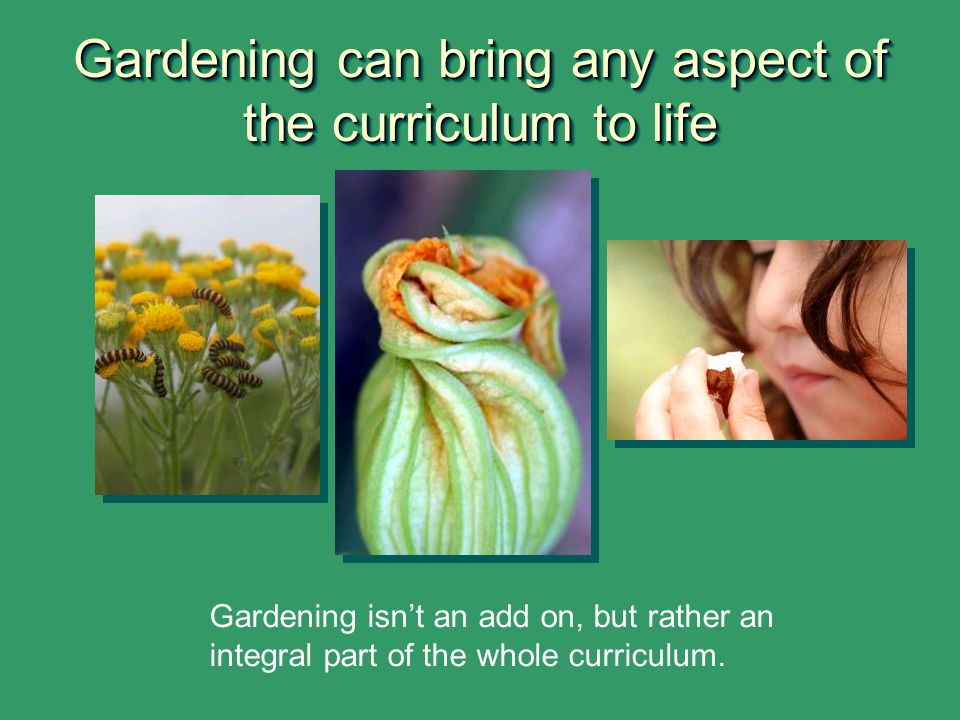 Gardening can bring any aspect of the curriculum to life Gardening isn't an add on, but rather an integral part of the whole curriculum.