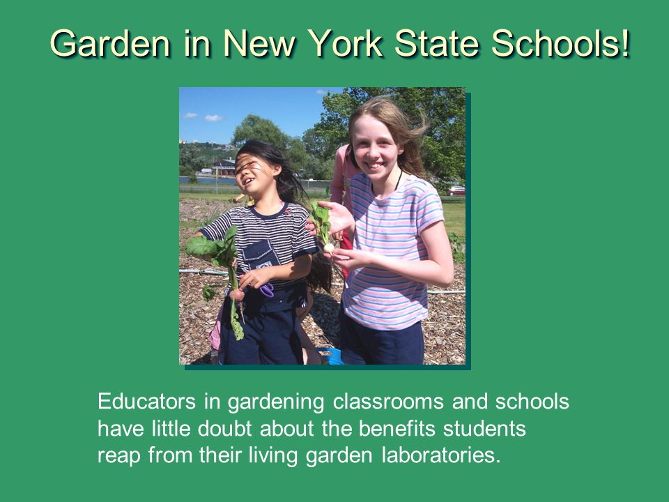 Garden in New York State Schools! Educators in gardening classrooms and schools have little doubt about the benefits students reap from their living g