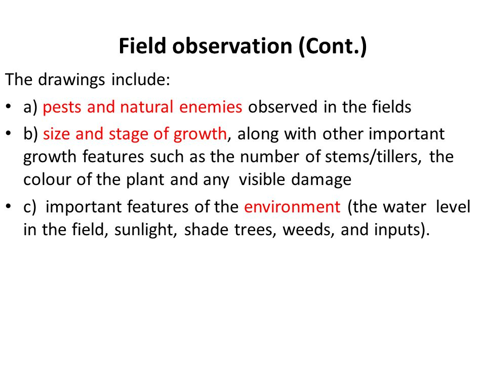Field observation (Cont.) The drawings include: a) pests and natural enemies observed in the fields b) size and stage of growth, along with other important growth features such as the number of stems/tillers, the colour of the plant and any visible damage c) important features of the environment (the water level in the field, sunlight, shade trees, weeds, and inputs).